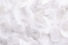 Background of white feathers. Texture of bright pigeon feathers royalty free stock photography