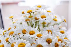 Background of white field daisies with yellow centers.  stock images