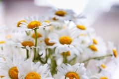 Background of white field daisies with yellow centers.  stock photo