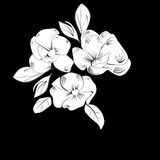 Background with white flowers. Monochrome illustration Stock Photography