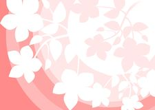 Background with white flowers. White flowers on a pink background with circles Stock Photos