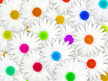 Background of white flowers with motley center Royalty Free Stock Images