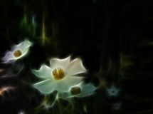 Glowing flowers. Background with white glowing flowers Royalty Free Stock Photography