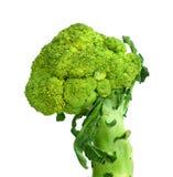 Background white isolated broccoli brocolli diet vegetable raw organic nature vegetables stem fresh health object food vegetari Stock Images