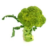 Background white isolated broccoli brocolli diet vegetable raw organic nature vegetables stem fresh health object food vegetari Royalty Free Stock Photos