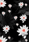 Background with white lily flowers Royalty Free Stock Photography