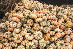 Background of White Mimi-Pumpkin Gourds Stock Images