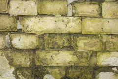 Background of white bricks with moss Royalty Free Stock Photos