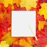 Background, white paper and autumn leaves Royalty Free Stock Photography