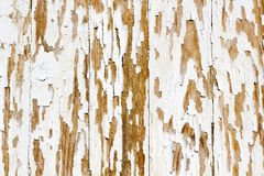 Background of white, peeling paint on an old wall Stock Images