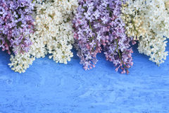 background of white and purple lilac on blue  surface Royalty Free Stock Photography