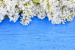 Background of white and purple lilac on blue  surface Stock Photography