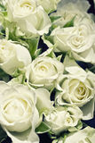 Background from white roses Royalty Free Stock Images