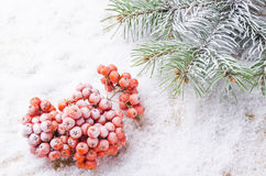 The background from white snow and a branch was eaten Stock Images