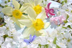 Background with white spring flowering Stock Image
