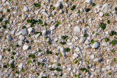 Background with white stones and green glass Royalty Free Stock Image