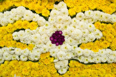 Background of white and yellow chrysanthemum flower Royalty Free Stock Photography