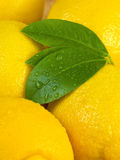 Background of whole lemons Royalty Free Stock Photography