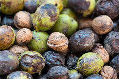 Background of wild walnuts Royalty Free Stock Photography