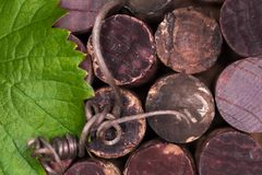 Background of wine corks with a grape leaf. View from above. Background of old wine corks with a green grape leaf lying on them. View from above Stock Photography