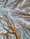 Background from winter bare brown tree branches Stock Photos
