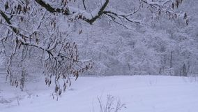 Background of winter forest with snow-covered branches trees stock video