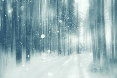 Background winter forest Stock Photos