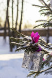Background winter landscape Christmas gift hanging on snow covered spruce outdoors Royalty Free Stock Photos