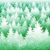 Background with winter spruce forest Stock Image