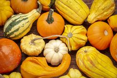Background of winter squash and gourds. Background of colorful winter squash and ornamental gourds on rustic wood royalty free stock image