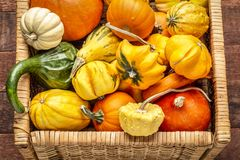 Background of winter squash and gourds. Background of colorful winter squash and ornamental gourds in a basket royalty free stock images