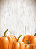 Background wit orange pumpkins Stock Photos