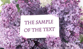 Background With A Lilac Royalty Free Stock Photography