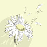 Background With Daisies Royalty Free Stock Image