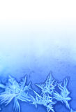 Background With Frosty Patterns Stock Photography