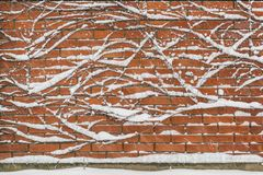 Free Background With Ivy Brick Wall Covered By Snow Stock Image - 106466591