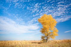 Free Background With Yellow Tree Royalty Free Stock Images - 14393959