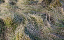 Background withered and green grass. Closeup Stock Photos