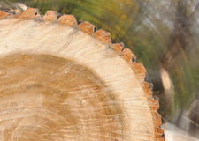 Background of wood Royalty Free Stock Photography