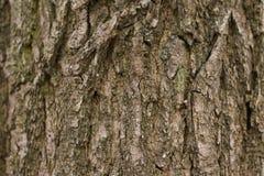 background, wood bark, wood Royalty Free Stock Photos