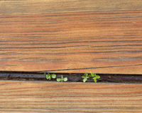 A background of wood Stock Images