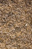 Background of wood shavings.Biomass fuels. Background of wood shavings. Natural biomass fuels Royalty Free Stock Images