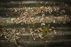 Background with wood and sheets Stock Images