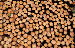 Background of wood stack. Stock Photo