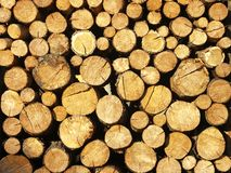 Background of wood stock Stock Photos