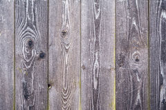 Background wood texture with green moss Stock Images