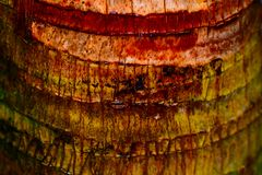 The background of the wood took in macro. Royalty Free Stock Photos