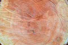 Background. wood. Trunk cross-section (top view). Stock Photography