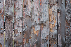 Background of wooden boards with a bough Stock Photography