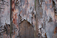 Background of wooden boards with a bough Stock Image